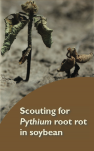 Pythium Root Rot in Soybean Scouting Card