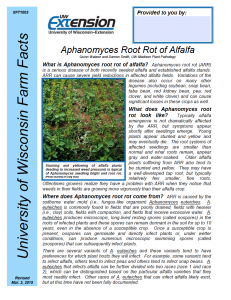 New Fact Sheet Describing Symptoms of Aphanomyces root rot and how to manage it.