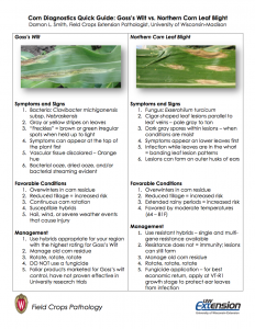 CLICK HERE to download - Corn Diagnostics Quick Guide: NCLSB vs. Goss's Wilt