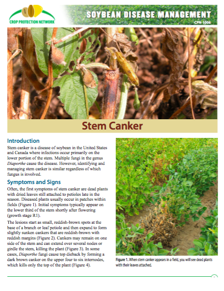 soybean pod and stem blight - HD 1794×2322